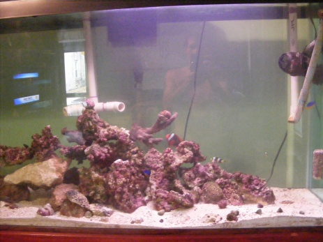 Click image for larger version  Name:Fish Tank 147.jpg Views:47 Size:62.7 KB ID:16326