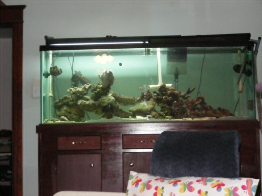 Click image for larger version  Name:Fish Tank 172.jpg Views:44 Size:62.8 KB ID:16328