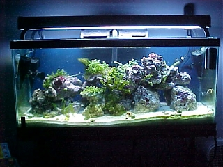 Click image for larger version  Name:032605tank.jpg Views:63 Size:85.8 KB ID:1668