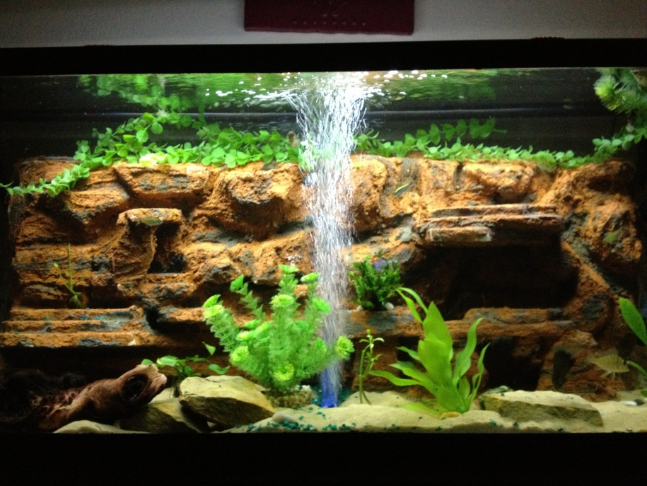 wall aquarium designs wall best home and house interior