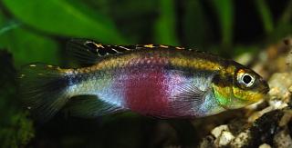 Click image for larger version  Name:Female Krib~1.jpg Views:54 Size:91.6 KB ID:169422