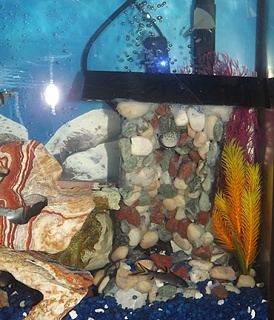Click image for larger version  Name:Sand_Fall_In_Aquarium.jpg Views:146 Size:197.1 KB ID:169654
