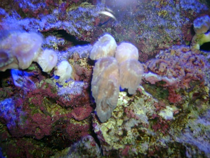 Click image for larger version  Name:coral.jpg Views:81 Size:79.5 KB ID:17095