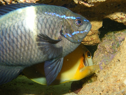 Click image for larger version  Name:Fish Tank 232.jpg Views:35 Size:76.0 KB ID:17122