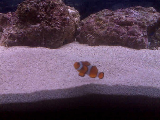 Click image for larger version  Name:nemo.jpg Views:43 Size:72.1 KB ID:17235