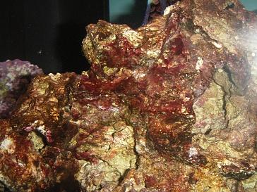 Click image for larger version  Name:Rust Vs Algae 003.jpg Views:87 Size:74.1 KB ID:17297