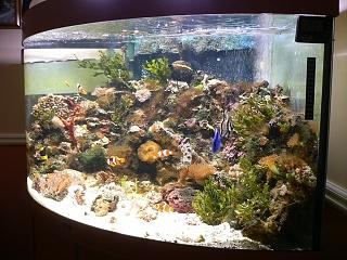 Click image for larger version  Name:Aquarium at Home 004.jpg Views:593 Size:75.2 KB ID:17340