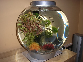 Click image for larger version  Name:my tropicals.jpg Views:187 Size:71.9 KB ID:17518