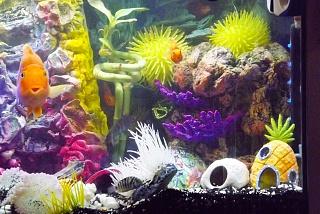 Click image for larger version  Name:PeekABoo_3ParrotFish.jpg Views:103 Size:257.5 KB ID:175292