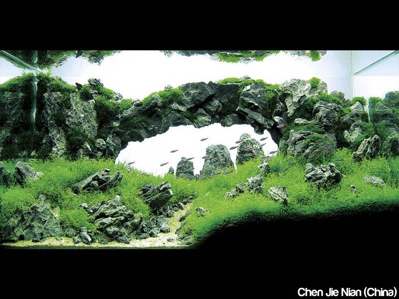 Click image for larger version  Name:aquaforest-aquaium-iaplc-2010.jpg Views:218 Size:133.5 KB ID:175440