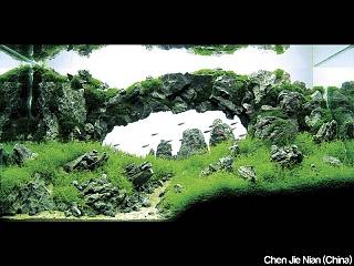 Click image for larger version  Name:aquaforest-aquaium-iaplc-2010.jpg Views:224 Size:133.5 KB ID:175440