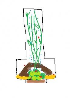 Click image for larger version  Name:planted shrimp tank idea.jpg Views:118 Size:29.2 KB ID:175475