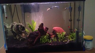 Click image for larger version  Name:20 gal tank.jpg Views:133 Size:140.9 KB ID:175714