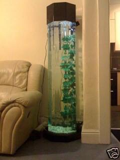 5ft column fish tank the classic fool aquarium advice for Column fish tank