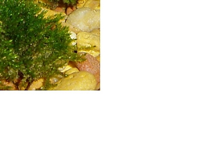 Click image for larger version  Name:moss_803.jpg Views:85 Size:29.7 KB ID:1798