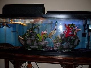 55 Gallon Tank Turtle Aquarium
