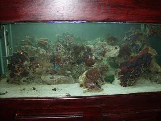 Click image for larger version  Name:aquarium 006.jpg Views:45 Size:73.9 KB ID:18099