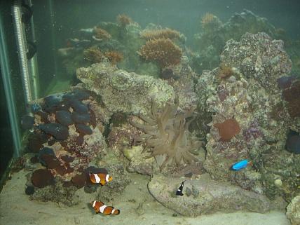 Click image for larger version  Name:aquarium 001.jpg Views:37 Size:75.8 KB ID:18100