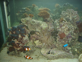Click image for larger version  Name:aquarium 001.jpg Views:41 Size:75.8 KB ID:18100