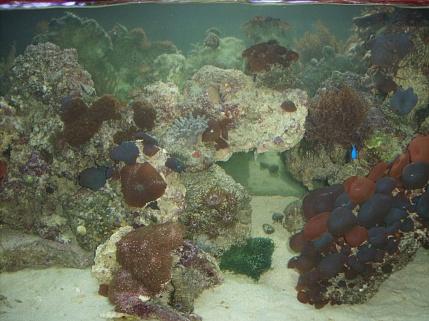 Click image for larger version  Name:aquarium 002.jpg Views:39 Size:76.0 KB ID:18101