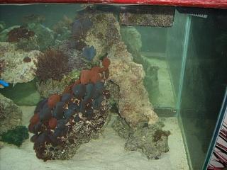 Click image for larger version  Name:aquarium 003.jpg Views:41 Size:75.8 KB ID:18102