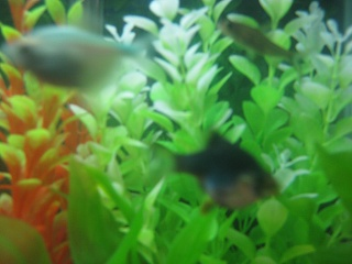 Click image for larger version  Name:Fishies 001.jpg Views:72 Size:59.7 KB ID:18135