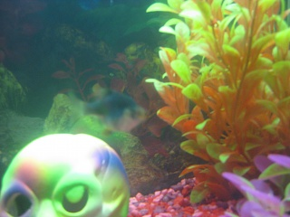 Click image for larger version  Name:Fishies 003.jpg Views:66 Size:69.8 KB ID:18137