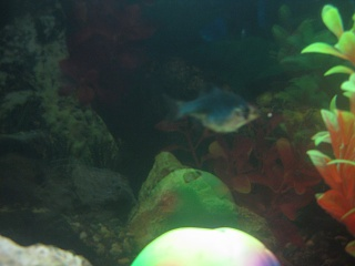 Click image for larger version  Name:Fishies 008.jpg Views:71 Size:49.1 KB ID:18138