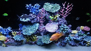 Click image for larger version  Name:new 4ft reef finished.jpg Views:102 Size:255.8 KB ID:181679