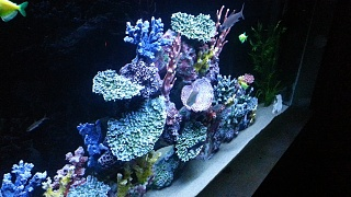 Click image for larger version  Name:reef from side.jpg Views:108 Size:223.4 KB ID:181680