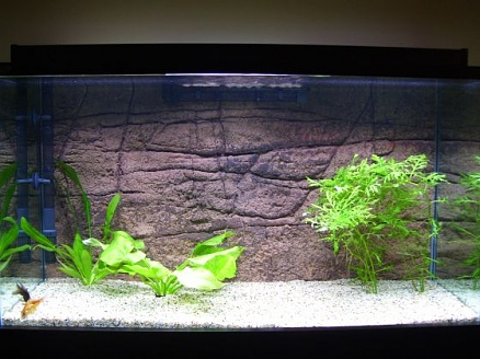 Click image for larger version  Name:Fish Tank 005small.jpg Views:82 Size:66.0 KB ID:18846