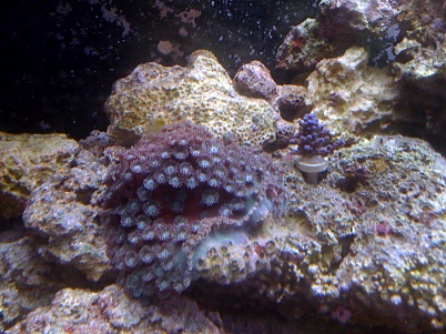 Click image for larger version  Name:coral2.jpg Views:51 Size:78.9 KB ID:19006