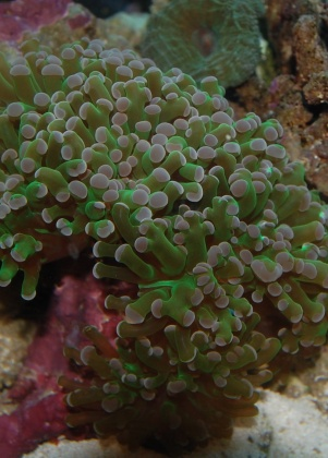 Click image for larger version  Name:frogspawn.jpg Views:36 Size:57.9 KB ID:19011