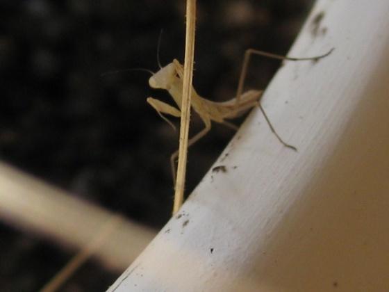 Click image for larger version  Name:mantis.jpg Views:36 Size:47.0 KB ID:19078