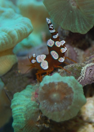 Click image for larger version  Name:sexy shrimp.jpg Views:42 Size:42.5 KB ID:19084