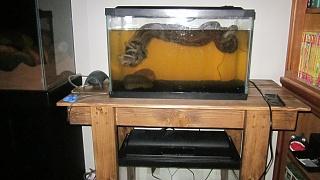 Click image for larger version  Name:aquarium advice 007.jpg Views:73 Size:189.3 KB ID:191047