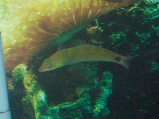 Click image for larger version  Name:new fish 001.jpg Views:52 Size:74.5 KB ID:19138