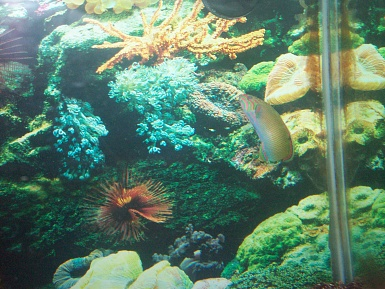 Click image for larger version  Name:new fish 001.jpg Views:50 Size:77.4 KB ID:19147