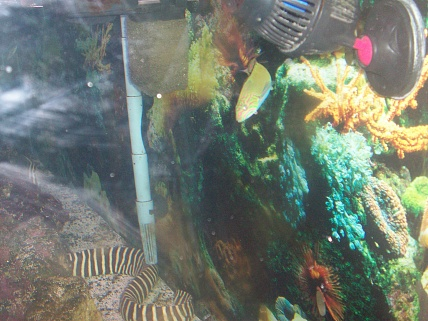 Click image for larger version  Name:new fish 002.jpg Views:52 Size:77.3 KB ID:19148