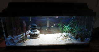 Click image for larger version  Name:AquariumFinished2.jpg Views:37 Size:112.0 KB ID:194154