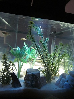 Click image for larger version  Name:AquariumFinished3.jpg Views:35 Size:235.2 KB ID:194156