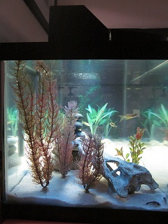 Click image for larger version  Name:AquariumFinished4.jpg Views:47 Size:236.7 KB ID:194157