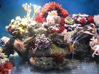 Click image for larger version  Name:marine tank 0008.jpg Views:50 Size:75.9 KB ID:19512