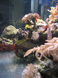 Click image for larger version  Name:marine tank 0014.jpg Views:44 Size:56.1 KB ID:19513