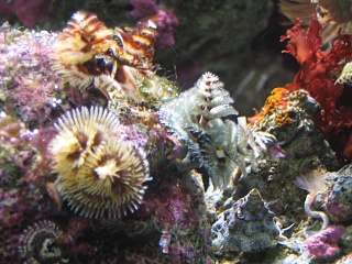 Click image for larger version  Name:marine tank 0020.jpg Views:51 Size:78.4 KB ID:19514