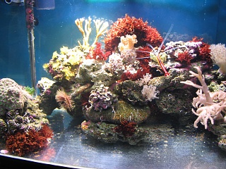 Click image for larger version  Name:marine tank 0012.jpg Views:46 Size:75.6 KB ID:19522