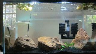Click image for larger version  Name:aquariumadviceupdate 007.jpg Views:37 Size:193.0 KB ID:196016