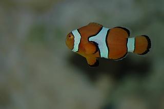 Click image for larger version  Name:Closeup Marlin.jpg Views:39 Size:37.3 KB ID:19758