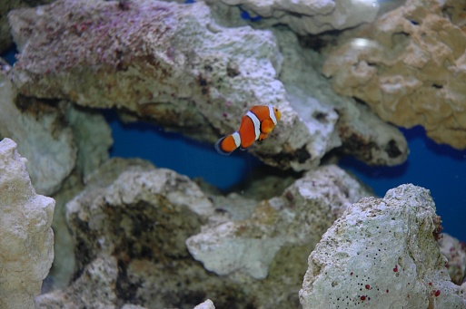 Click image for larger version  Name:Nemo.jpg Views:38 Size:72.6 KB ID:19762