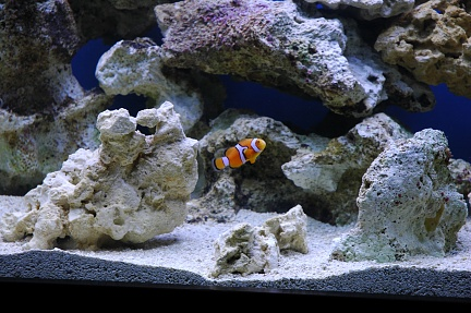 Click image for larger version  Name:Nemo1.jpg Views:39 Size:76.1 KB ID:19763